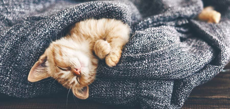 Why Do Cats Sleep So Much How Many Hours A Day Do Cats Sleep Cat Sleeping Cat Care Cat Fleas