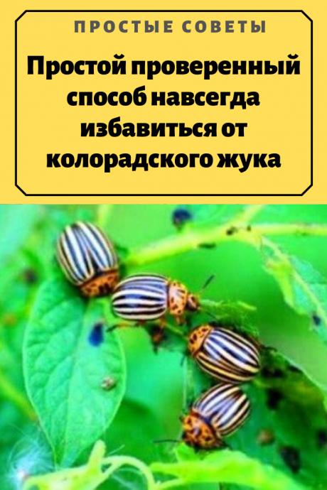 Власть Советов – 6 простых способов уничтожить слизней и улиток в ... | 690x460
