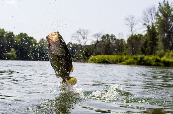 Why Michigan Is The Best Fly Fishing State In America Field Stream Fly Fishing Fishing Trip States In America