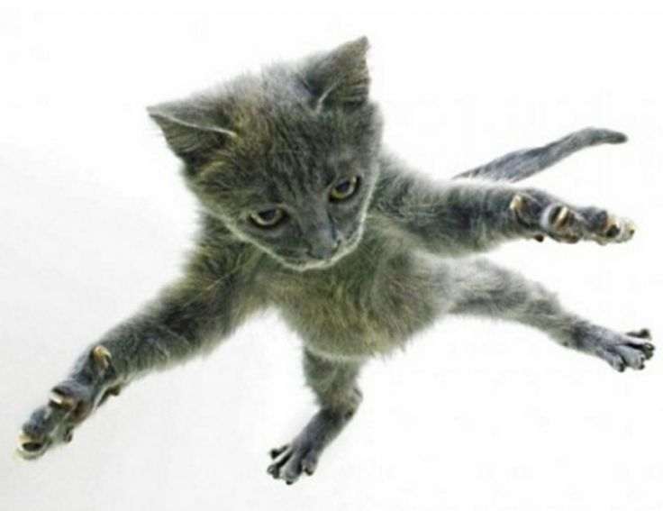 How Do Cats Survive High Falls Why Cats Always Land Feet First Cats Cat Facts Pets Cats