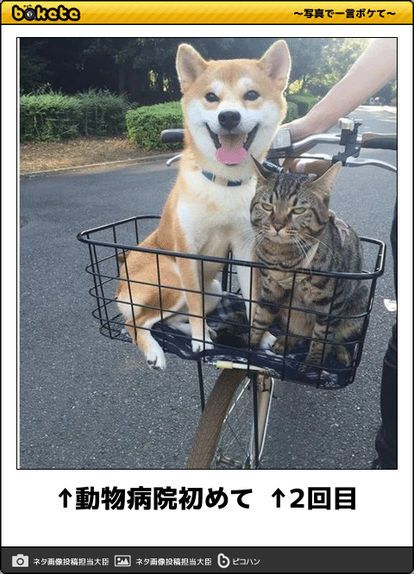 Pin By Hiroe Seto On 気になる Cute Funny Animals Funny Animal Pictures Funny Animals