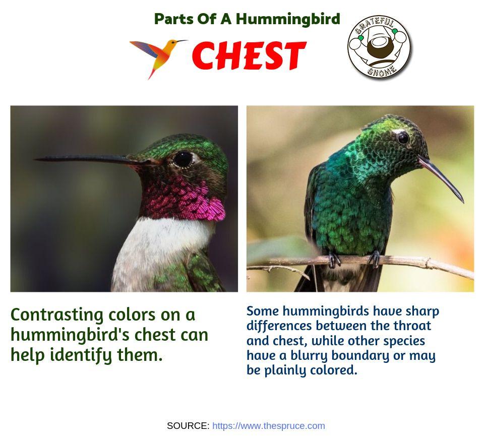 Parts of a Hummingbird Humming bird feeders, Hummingbird