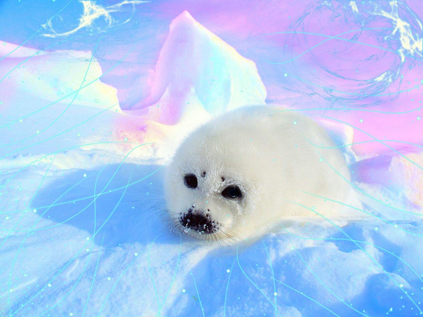 Pics For Cute Baby Seals Wallpaper Cute Seals Baby Seal Seal Pup