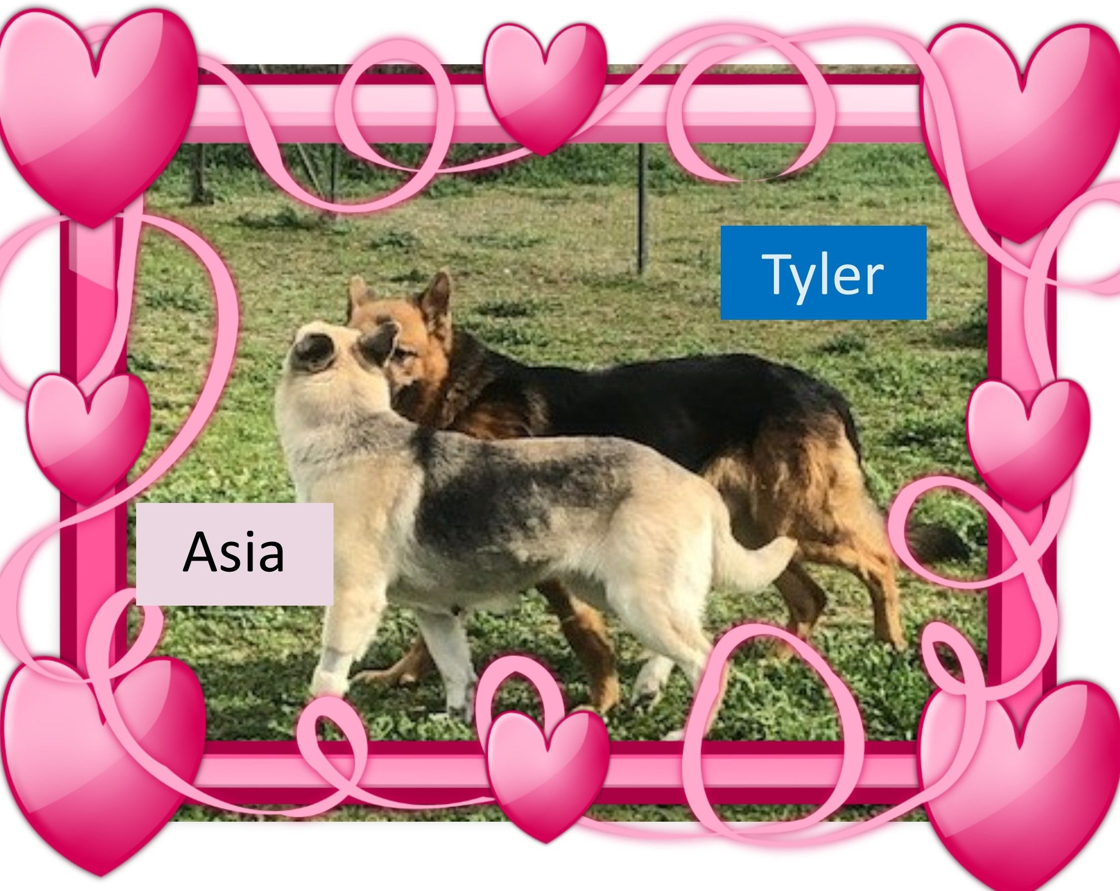 Asia And Tyler Are A Bonded Pair Of Gs Looking For Their Fur Ever