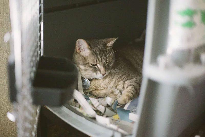 Pin On Cat Baby