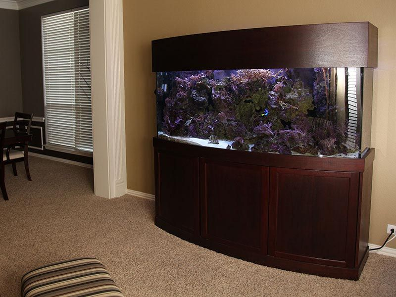 Front Corner Bow Aquarium