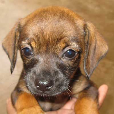 OMG look at this doll-baby! 11/2012 Dog Adoption San Diego - Adopt A Dog | Cat Adoption San Diego - Adopt A Cat | Helen Woodward Animal Center