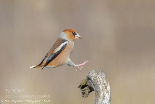 Landing by maxmagphotography