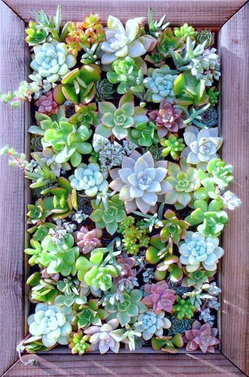 Attractive Succulent Wall Art 14