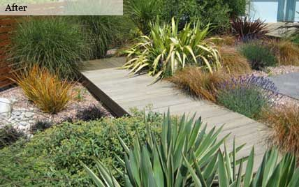 Coastal Garden Design in this garden the flowing carpet of blue succulents echoes the calming ripples of the sea bonus succulents perform well in often sandy coastal soils and Wooden Path And Coastal Planting