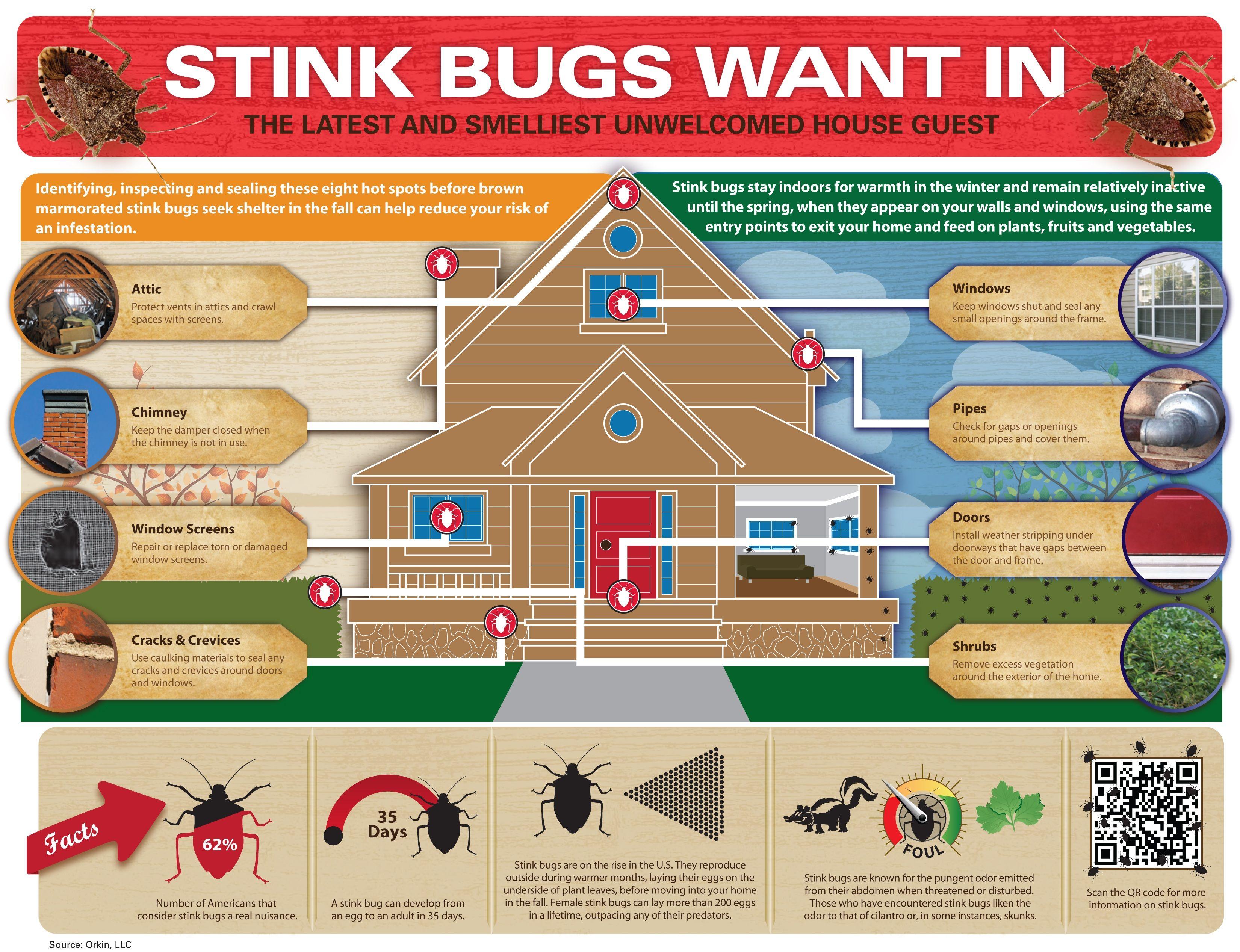 Stink Bug Infographic Infographics Pinterest Stink