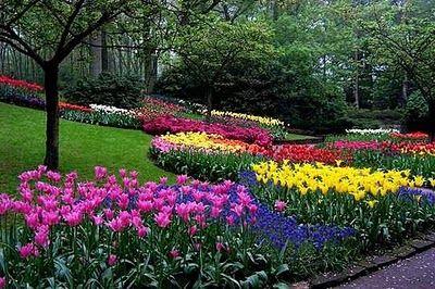 elegir las flores y las plantas para el jardin | Gardening - Plants ...