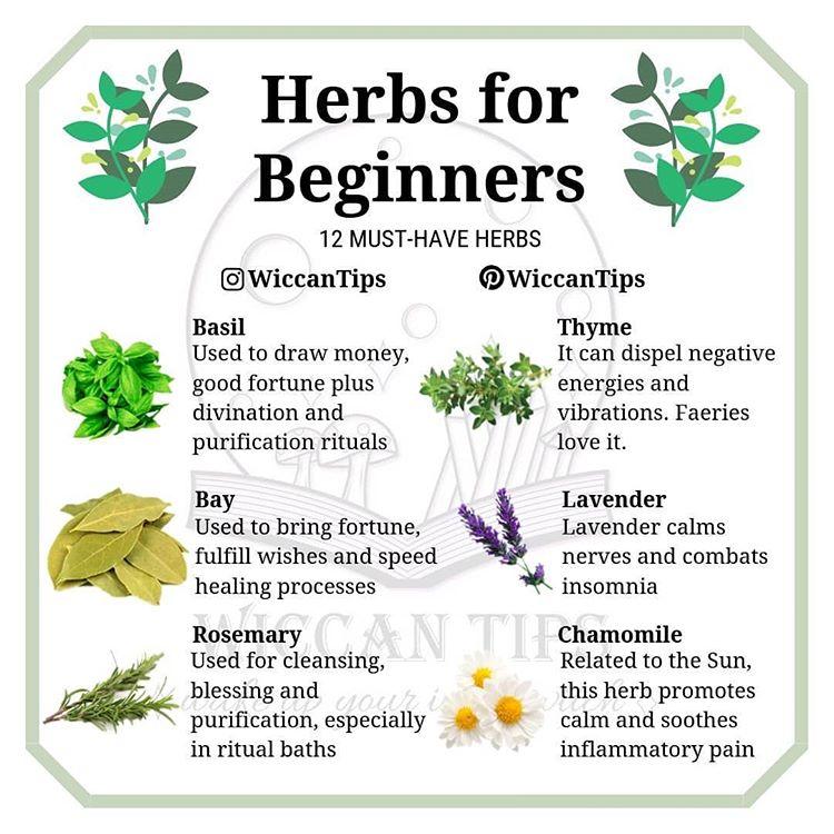 """ωιccαη ωιтcн on Instagram: """"Which herb is a must-have for you? Don't take this list very seriously, it is okay if you don't have/don't want to have some of these…"""""""