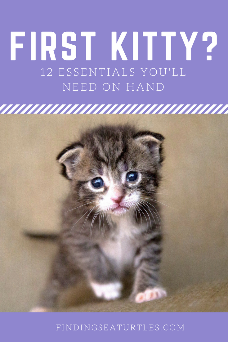 12 Essentials For The First Time Cat Owner Finding Sea Turtles First Time Cat Owner Kitten Care Raising Kittens