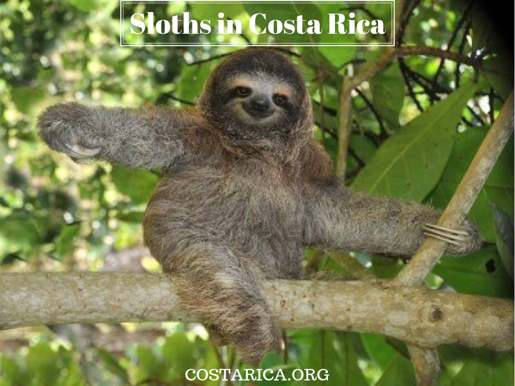 27+ Where to see sloths in costa rica ideas