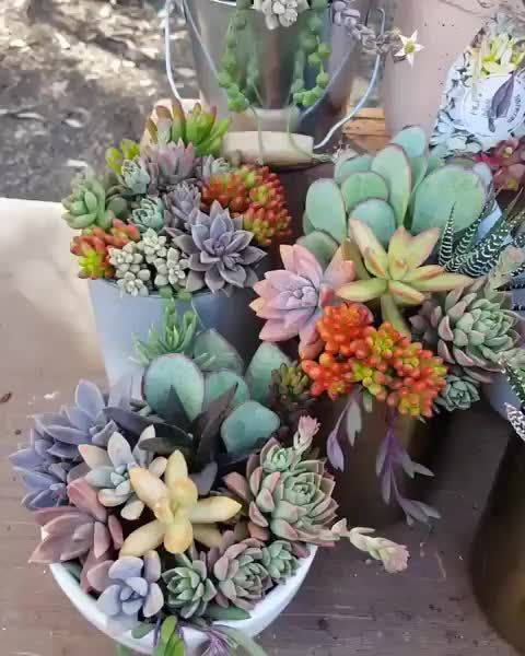 Photo of OMG! I need this! #succulents #succucity