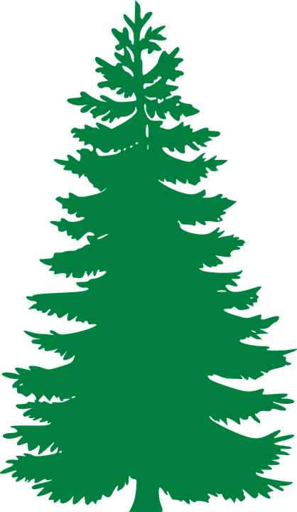 Pine Tree Clip Art Free : Image, Pixabay, Evergreen,, Trees,, Silhouette, Stencil,