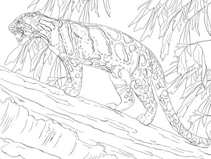 Click To See Printable Version Of Clouded Leopard Standing On Tree