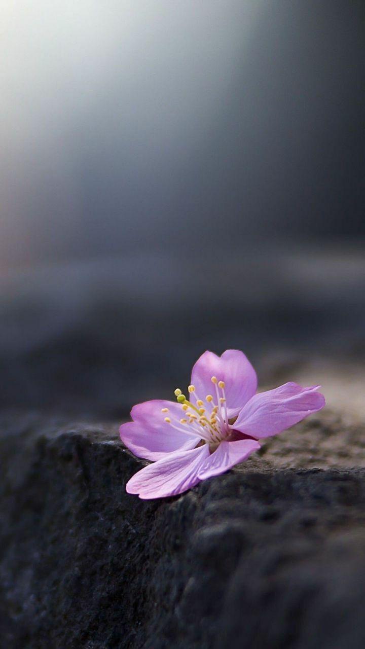 Pin by ahmed shehata on nice pinterest flowers beautiful