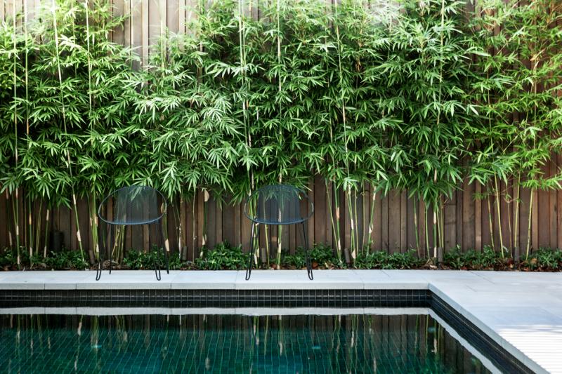 Gracilis Bamboo Plants Slender Weavers Non Invasive Plants Gumtree Australia Newcastle Area Bamboo Garden Bamboo Landscape Backyard Pool Landscaping