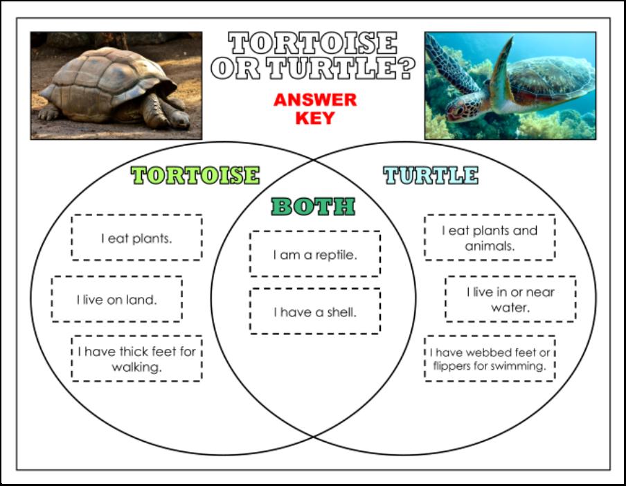 Tortoise Vein Diagram - Auto Electrical Wiring Diagram •