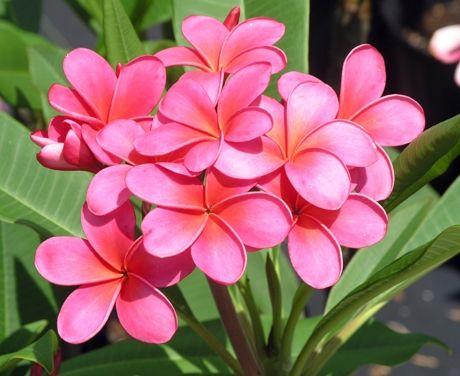 Pin On Beautiful Flowers Fㆍbeauty