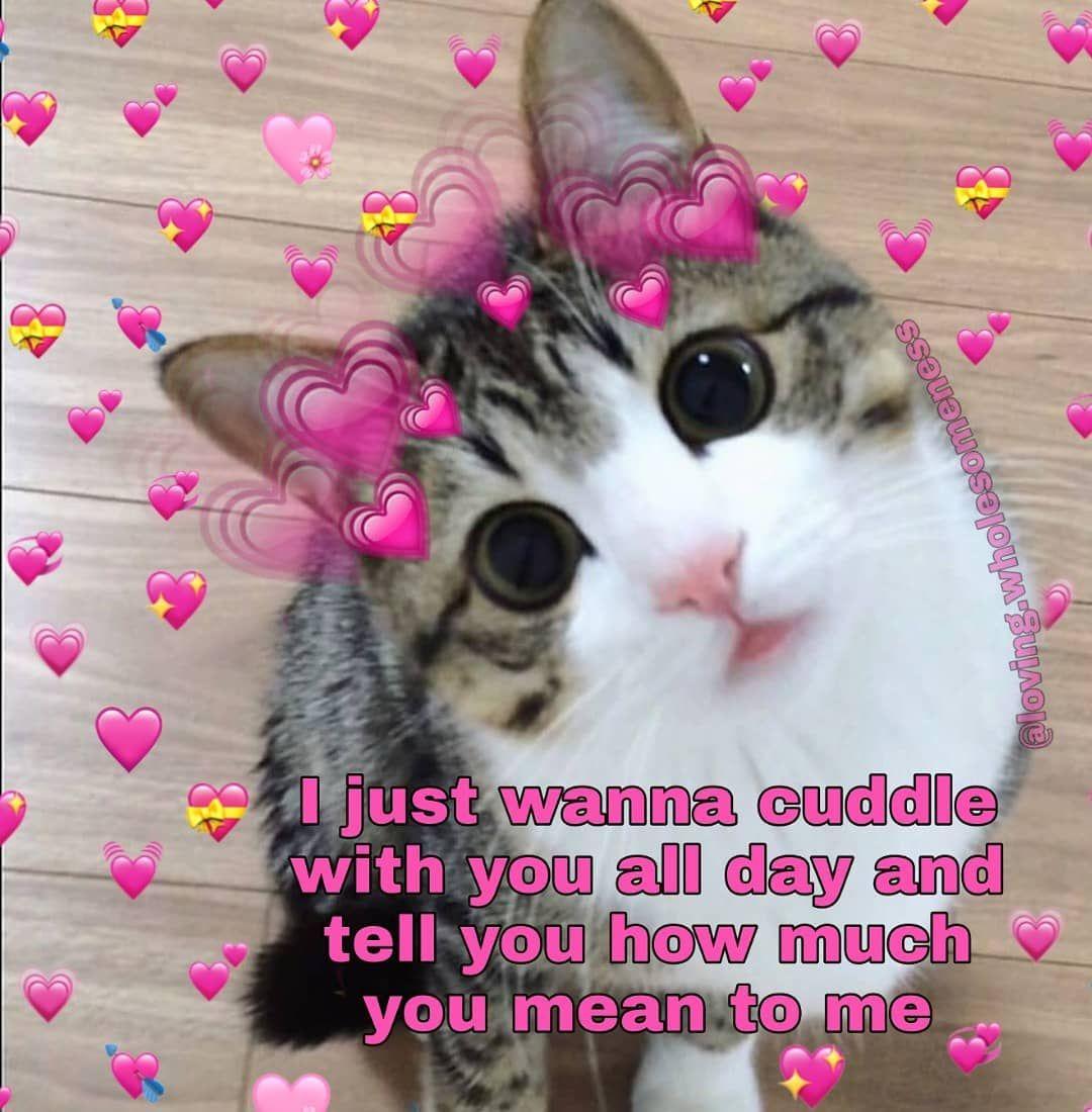 Hi How Are Ya Wholesomememes Wholesome Wholesomeness Purememes Relationshipmemes Couplememes Lo Cute Memes Wholesome Memes Couple Memes