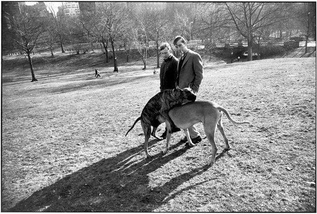 Garry Winogrand Tumblr Los Perros En El Parque N Y 1970 Parques Animales Fotografia
