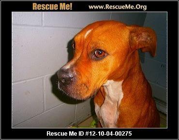 Michigan Boxer Rescue Adoptions Rescueme Org Boxer Rescue Boxer Dogs Post Animal