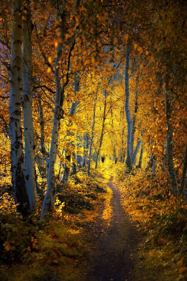 A magic Sunday by Saskia Dingemans - Photo 178866775 / 500px