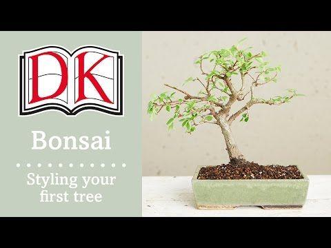 bonsai styling your first bonsai tree youtube arbre dintrieur bonsa soin