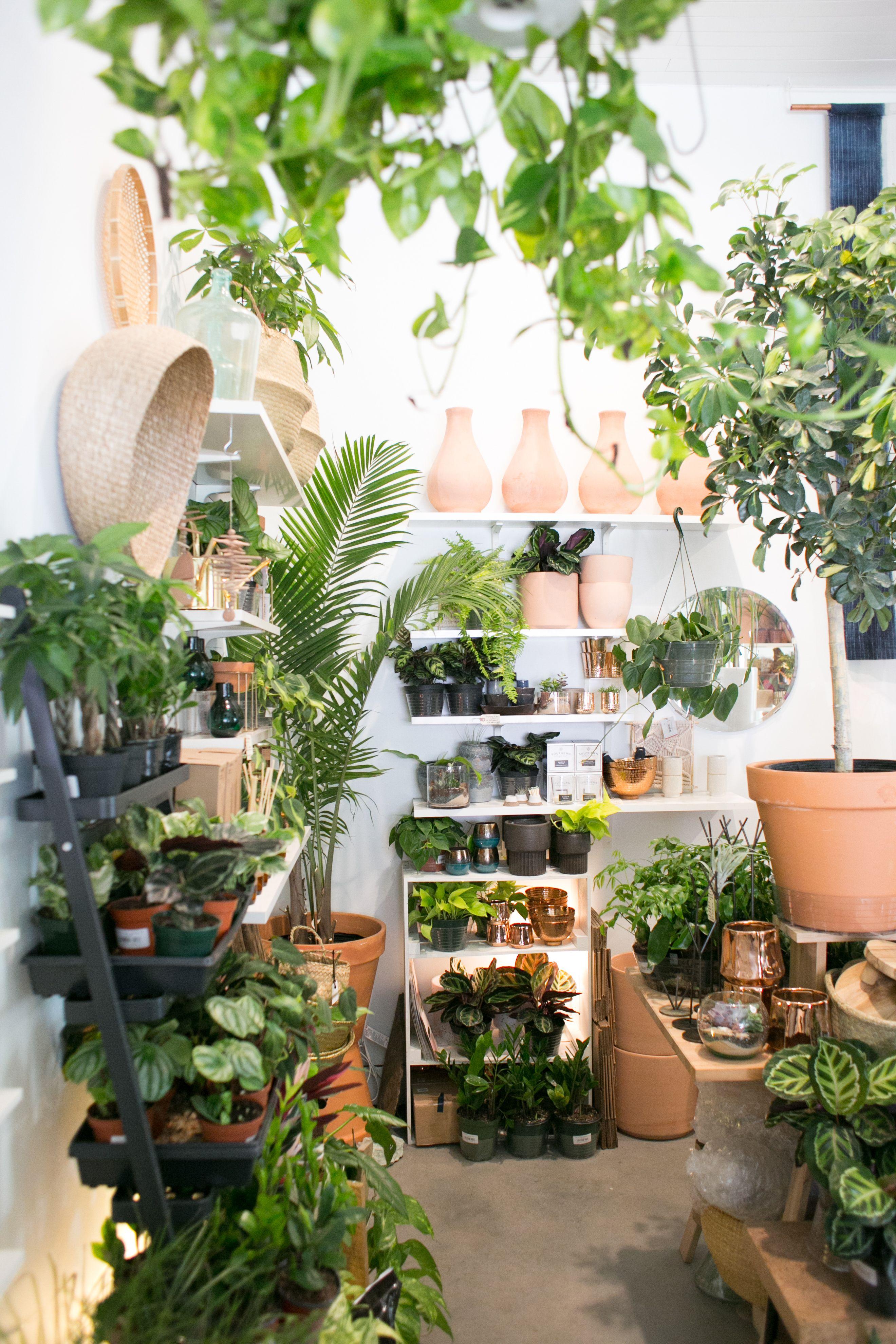 The Zen Succulent Plant Shop Plants Indoor Plants Planting