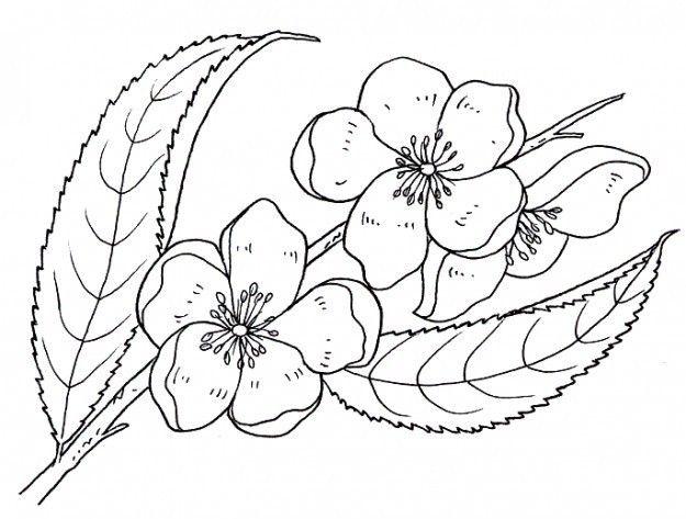 60 Imagenes De Flores Para Colorear Dibujos Colorear Imagenes Dibujos Para Colorear Paginas Para Colorear De Flores Dibujos De Flores