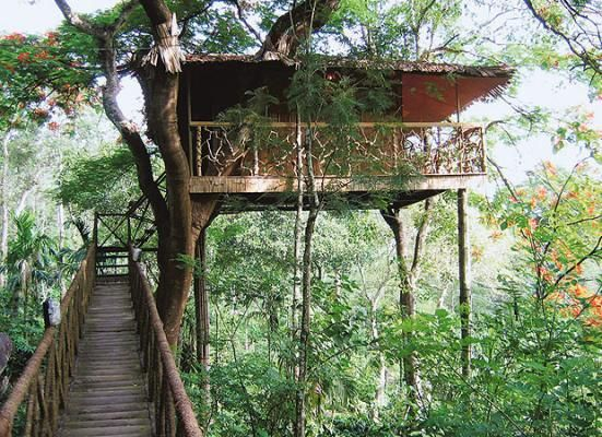The World S Best Treehouse Hotels Tree Houses Tree