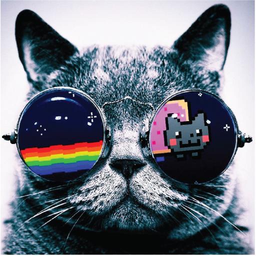 Cool Cat Nyan Cat Cat Glasses Cool Cats