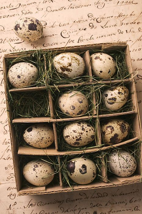 Quail Eggs In Box_Garry Gay