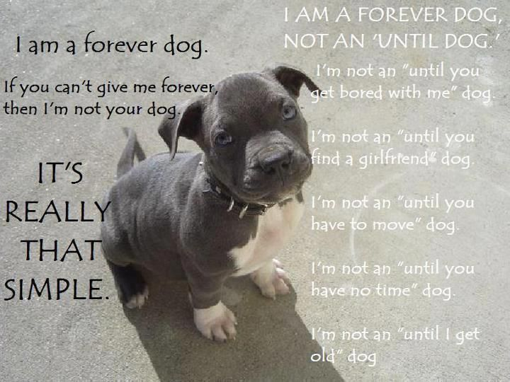 For the love to the pitties!