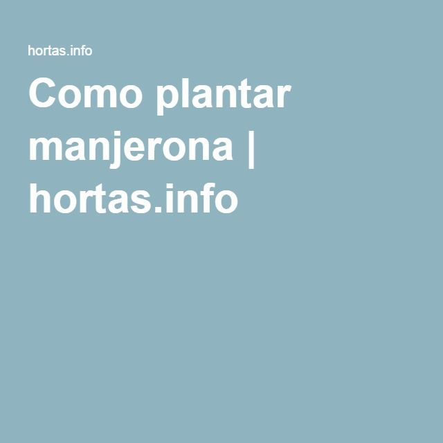 Como plantar manjerona   hortas.info