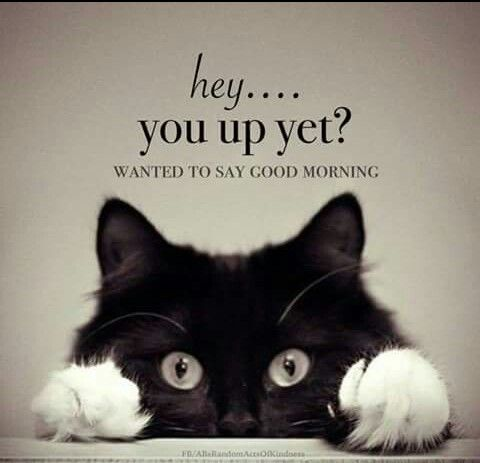 Good Morning Good Morning Meme Funny Good Morning Memes Funny Good Morning Quotes