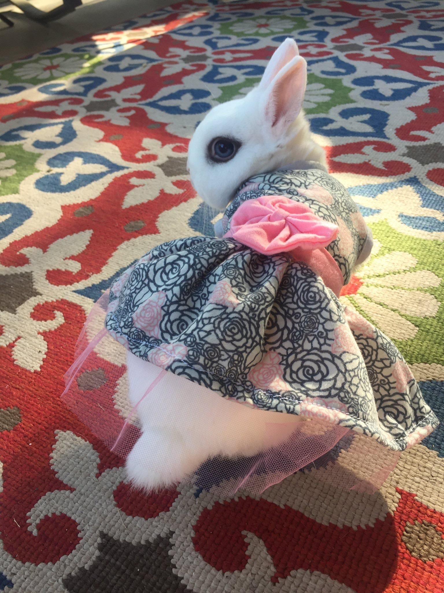 Pet Shop Near Me Rabbit Price