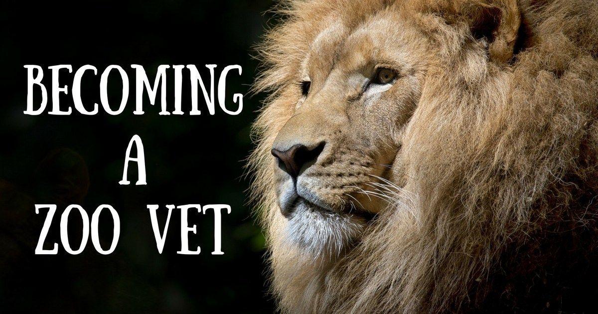 a ZOO Vet Zoo veterinarian, Cat vet, Pet vet