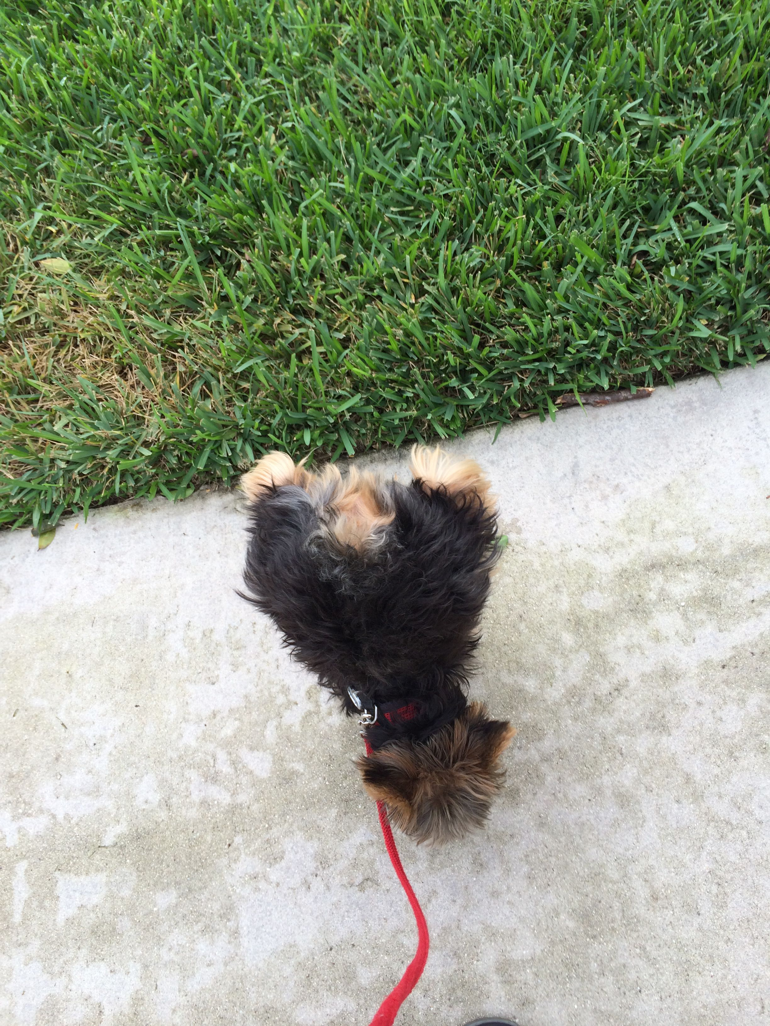 My Dog Does Handstand To Whiz Glad I Don T Have Too Go Through
