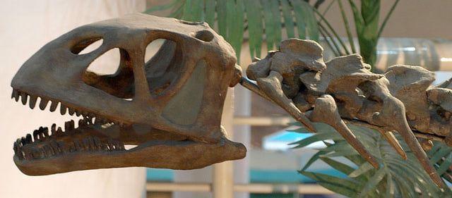 Bellusaurus Facts: Bellusaurus (Paleozoological Museum of China)