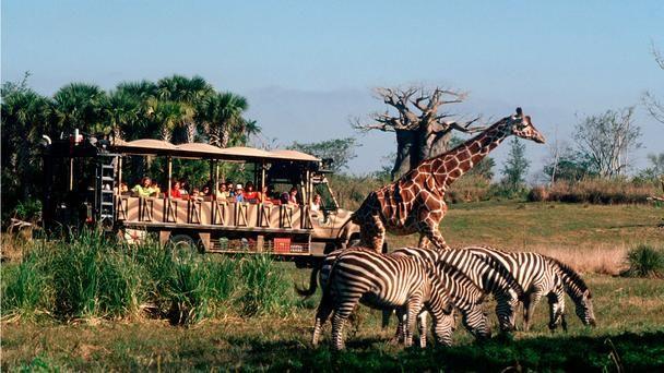 The Coolest Walt Disney World Rides Disney World Rides Animal