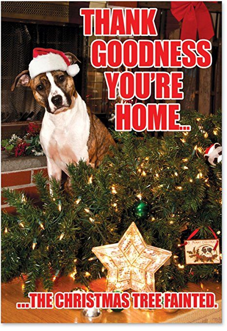 Funny Boxer Dog Holiday Card Thank Goodness You Re Home The