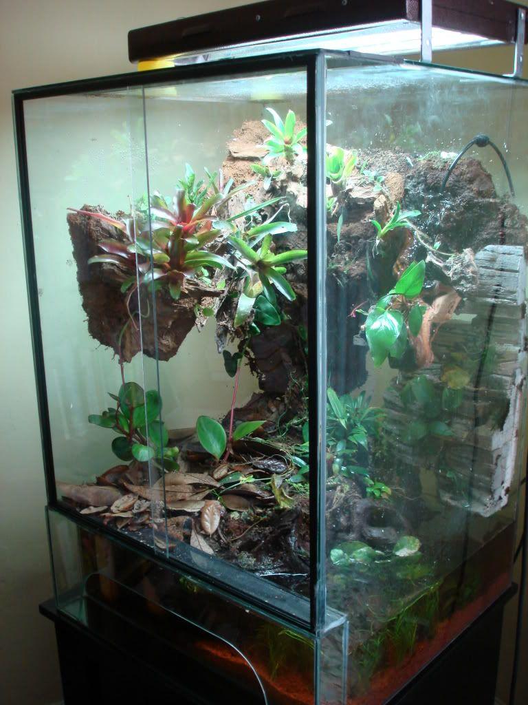 90 gallon eroded streamside paludarium | Other -ariums ... 10 Gallon Dart Frog Vivarium