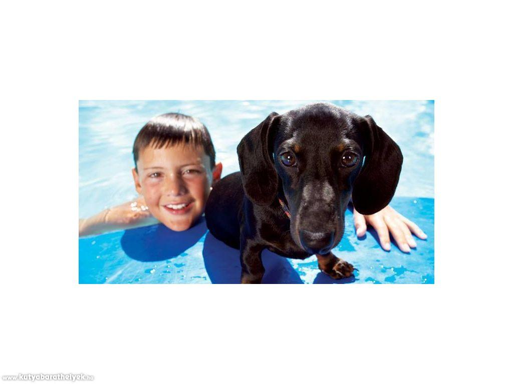 Hotel Három Hattyú *** Balatonföldvár - kutyabarát hotel, a kedvenceddel is szívesen látnak!   #kutya #dog #balaton #kutyabarát #hotel #dogfriendly #travel #hungary #balatonföldvár #kutyabaráthelyek