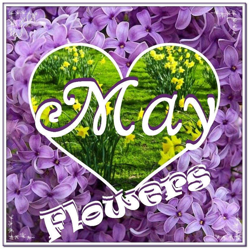 May Flowers by cjlutje.deviantart.com on @DeviantArt