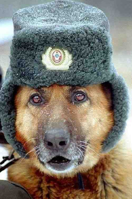 c4dbfd27541 Stray dogs in Moscow have learned to ride the subway. - OMG Facts ...