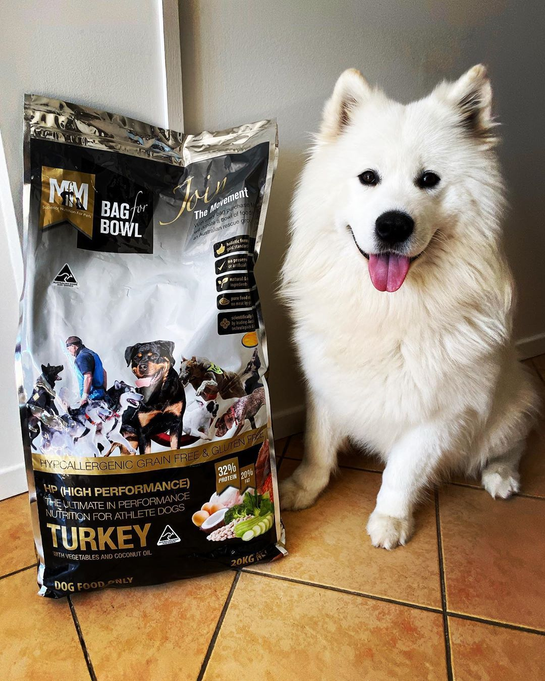 What Causes Canine Diarrhea In Dogs And Puppies Got To Love A Bag